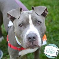 Adopt A Pet :: Chico - Ann Arbor, MI