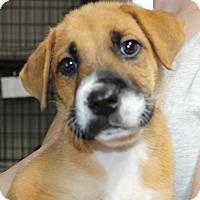 Adopt A Pet :: Tank - Daleville, AL