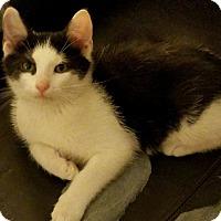 Adopt A Pet :: Drogo - LaGrange, KY