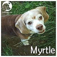 Adopt A Pet :: Myrtle - Pittsburgh, PA