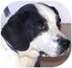 Beagle/Fox Terrier (Smooth) Mix Dog for adoption in Hamilton, Ontario - Lucky