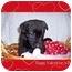 Photo 4 - Labrador Retriever Mix Puppy for adoption in Taylor Mill, Kentucky - Gracie
