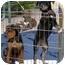 Photo 3 - Hound (Unknown Type)/German Shepherd Dog Mix Dog for adoption in Berkeley, California - Dalia