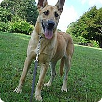 Adopt A Pet :: SUMMER - ROCKMART, GA