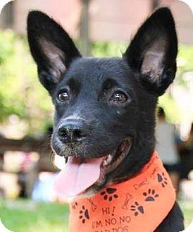 Labrador Retriever Mix Dog for adoption in Castro Valley, California - Stock
