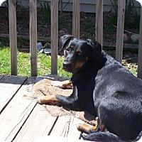 Adopt A Pet :: Della - West Allis, WI