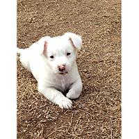 Adopt A Pet :: Maverick - Tempe, AZ