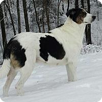 Adopt A Pet :: Ruth - Normandy, TN