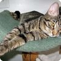 Adopt A Pet :: Emery - Powell, OH