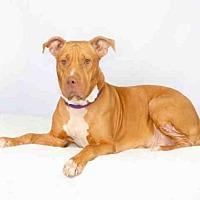 Adopt A Pet :: SISTER GIRL - Hampton Bays, NY