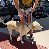 Adopt A Pet :: Marlin aka Rowdy - White Settlement, TX