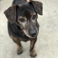 Adopt A Pet :: Luke - Natchitoches, LA
