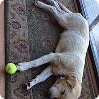 Adopt A Pet :: Aloe - Evergreen, CO
