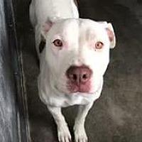 Adopt A Pet :: Cadence Meyer - Seattle, WA