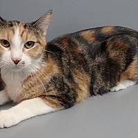 Adopt A Pet :: Starr - Seguin, TX