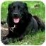 Photo 2 - Labrador Retriever Dog for adoption in Osseo, Minnesota - Jack
