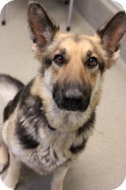 German Shepherd Dog Mix Dog for adoption in Columbus, Georgia - Princess 9731