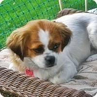Adopt A Pet :: Roxy - Toronto, ON
