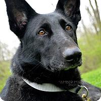 Adopt A Pet :: Rune - Indianapolis, IN