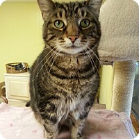 Adopt A Pet :: Missy - Cleveland, OH