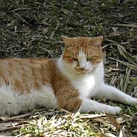 Adopt A Pet :: Roger - Naples, FL