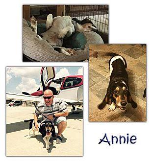 Basset Hound Dog for adoption in Marietta, Georgia - Annie