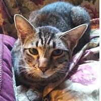 Adopt A Pet :: Ricky - Marion, NC