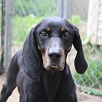 Adopt A Pet :: Esmeralda - Armonk, NY