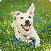 Adopt A Pet :: Sonny - Millersville, MD