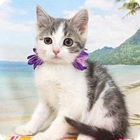 Adopt A Pet :: Galio - Harrisonburg, VA