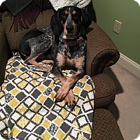 Adopt A Pet :: JUNEbug - Staunton, VA
