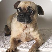 Adopt A Pet :: Ivan - Gardena, CA