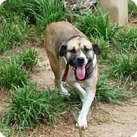 Adopt A Pet :: Cheryl - Buchanan Dam, TX