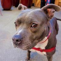 Adopt A Pet :: Zephyr - Seattle, WA