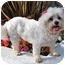 Photo 1 - Bichon Frise/Maltese Mix Dog for adoption in Los Angeles, California - BESSIE