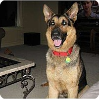 Adopt A Pet :: Dexter - Green Cove Springs, FL