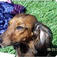 Adopt A Pet :: BEBE - Garden Grove, CA