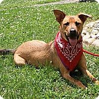 Adopt A Pet :: Trapper - Rockaway, NJ