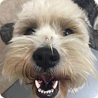 Adopt A Pet :: Archer - Austin, TX