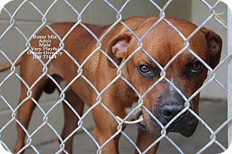 Boxer Mix Dog for adoption in Texarkana, Arkansas - Sammy