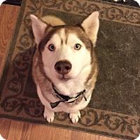 Adopt A Pet :: Diesel - Crystal Lake, IL
