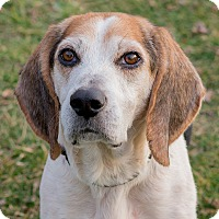 Adopt A Pet :: Picasso - Westfield, NY