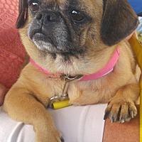 Adopt A Pet :: Raya - Wilmington, DE
