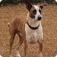 Adopt A Pet :: Fran - O Fallon, IL