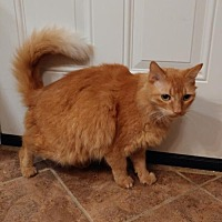 Adopt A Pet :: Ginger (Courtesy Listing) - Hampton, VA