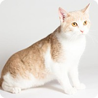 Adopt A Pet :: Sandy - Kingston, ON