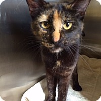 Adopt A Pet :: Olivia (PetValu) - Trenton, NJ