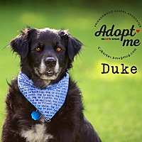 Adopt A Pet :: Duke - Friendswood, TX