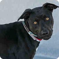 Adopt A Pet :: Shadow - Agoura, CA