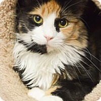 Adopt A Pet :: Catalina Goby - Philadelphia, PA